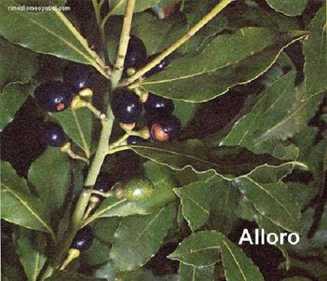 Sollievo per lombalgie e coliche - image ALLORO5 on http://rimediomeopatici.com