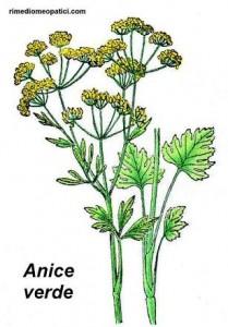Se l'alito è pesante - image ANICE8-209x300 on http://rimediomeopatici.com