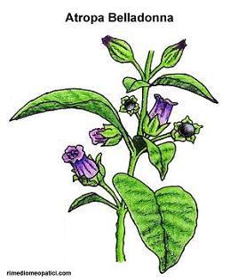 Belladonna - image ATROPA-BELLADONNA1 on http://rimediomeopatici.com