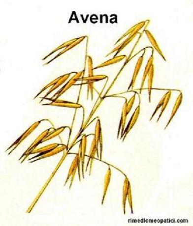 Sollievo per lombalgie e coliche - image AVENA1 on http://rimediomeopatici.com