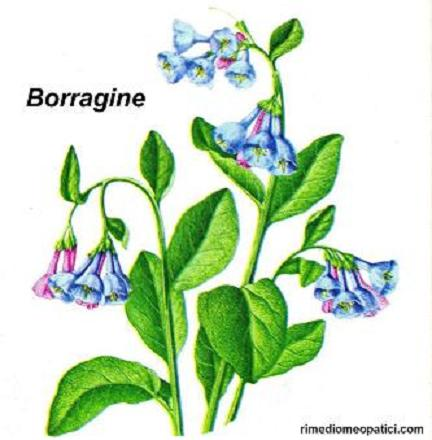 Sollievo per lombalgie e coliche - image BORRAGINE4 on http://rimediomeopatici.com