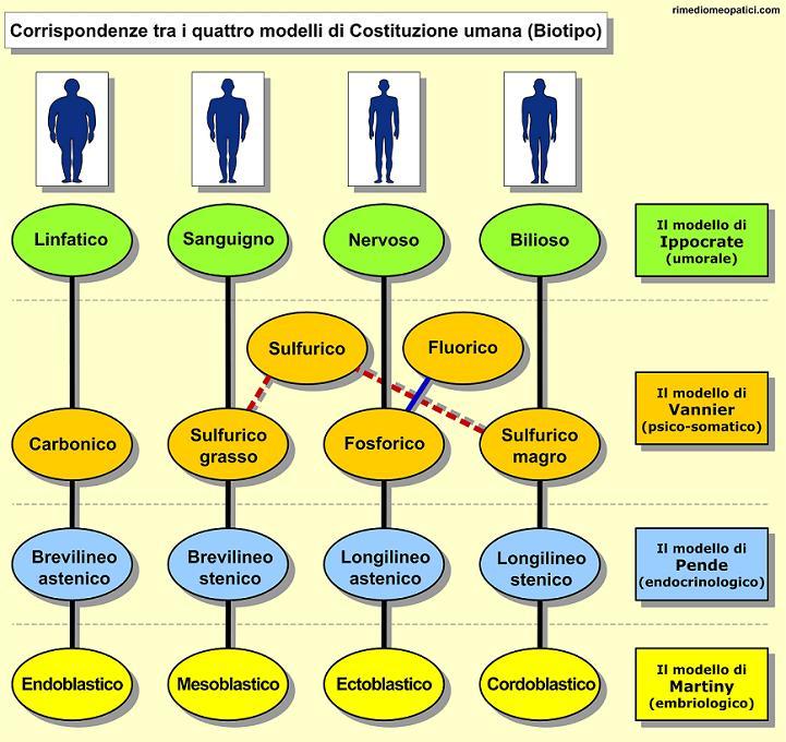 Omeopatia e Costituzioni - image COSTITUZIONI_18.7 on http://rimediomeopatici.com