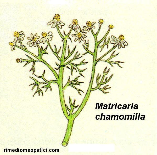 Sollievo per lombalgie e coliche - image Camomilla on http://rimediomeopatici.com
