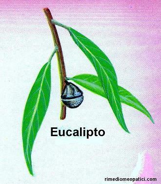 Sollievo per lombalgie e coliche - image EUCALIPTO2 on http://rimediomeopatici.com