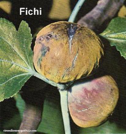Sollievo per lombalgie e coliche - image FICHI4 on http://rimediomeopatici.com