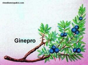Se l'alito è pesante - image GINEPRO-300x222 on http://rimediomeopatici.com