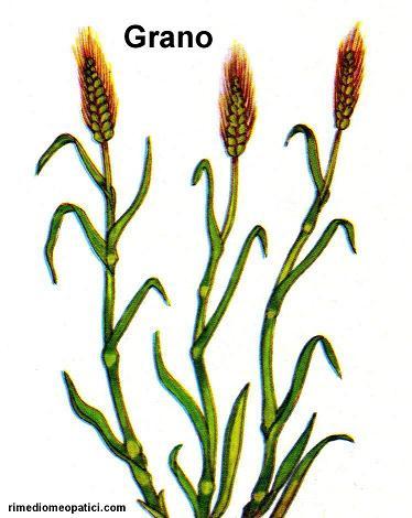 Sollievo per lombalgie e coliche - image GRANO4 on http://rimediomeopatici.com
