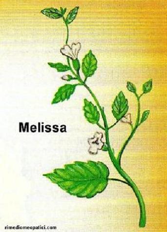 Addio mal di testa - image MELISSA1 on http://rimediomeopatici.com
