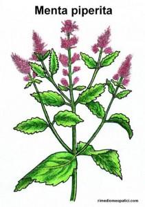 Se l'alito è pesante - image MENTA_PIPERITA-211x300 on http://rimediomeopatici.com