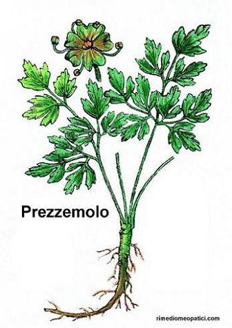 Addio mal di testa - image PREZZEMOLO2 on http://rimediomeopatici.com