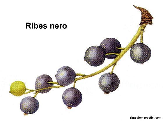 Sollievo per lombalgie e coliche - image Ribes-nero1 on http://rimediomeopatici.com