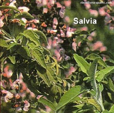 Capelli a posto - image SALVIA5 on http://rimediomeopatici.com