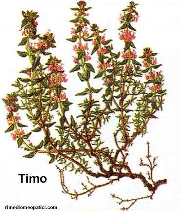 Addio mal di testa - image TIMO4 on http://rimediomeopatici.com