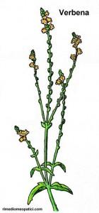 Se l'alito è pesante - image Verbena-140x300 on http://rimediomeopatici.com