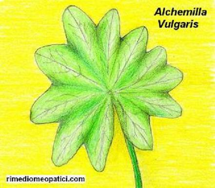 Per solo donne - image ALCHEMILLA8 on https://rimediomeopatici.com