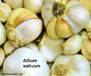 Allium sativum - image ALLIUM_SATIVUM2-300x249 on https://rimediomeopatici.com