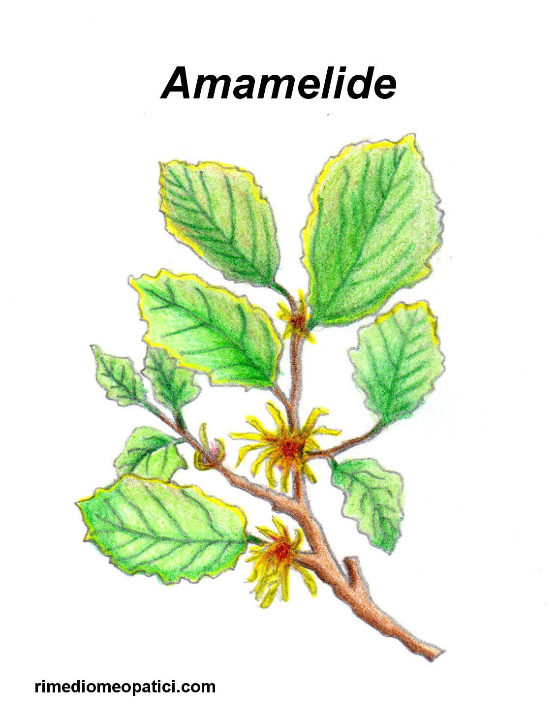 AMAMELIDE