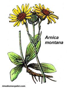 Arnica - Artemisia - image ARNICA2 on https://rimediomeopatici.com