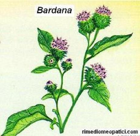 Emorroidi e vene varicose ko - image BARDANA9 on https://rimediomeopatici.com