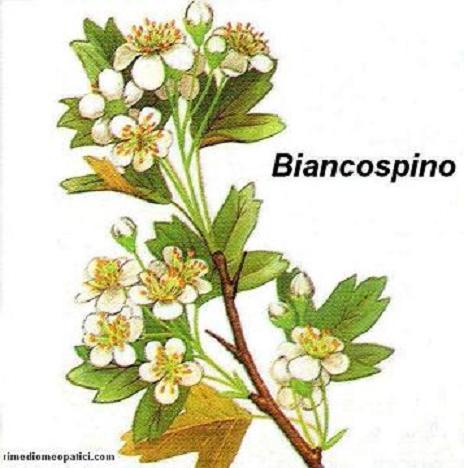 Alopecia Calvizie - image BIANCOSPINO6 on https://rimediomeopatici.com
