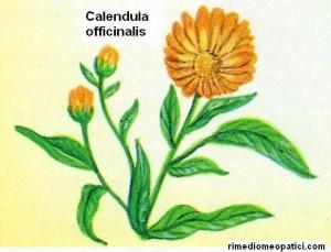 Calendula - Camomilla - image CALENDULA-300x229 on https://rimediomeopatici.com