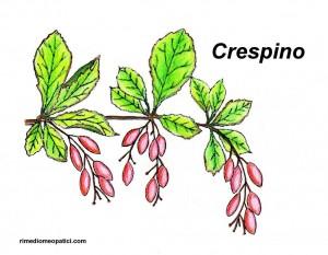 Crespino - Drosera - image CRESPINO1-300x233 on https://rimediomeopatici.com