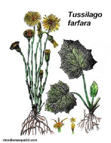 Via raffreddore-tosse-influenza-ecc. - image FARFARO2 on https://rimediomeopatici.com
