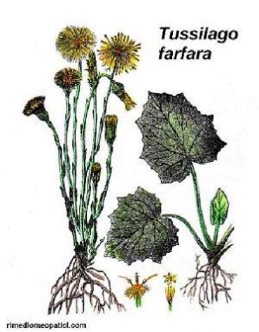 Digestione facile - image FARFARO3 on https://rimediomeopatici.com