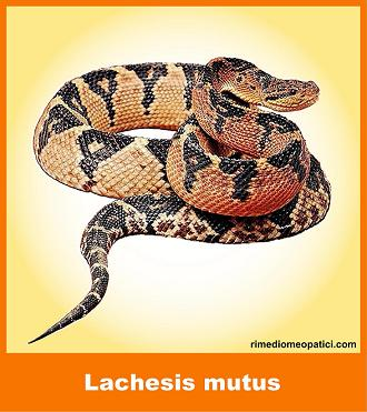 Lachesis - image LACHESIS-MUTUS_2_8.51 on https://rimediomeopatici.com