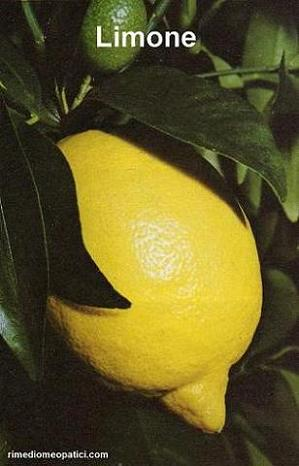 Digestione facile - image LIMONE3 on https://rimediomeopatici.com