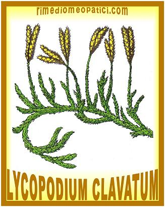 Lycopodium - image Lycopodium-clavatum-X_83 on https://rimediomeopatici.com