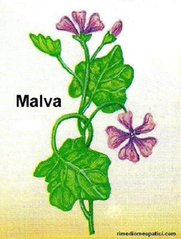 Per scottature-punture d'insetti - image MALVA4 on https://rimediomeopatici.com