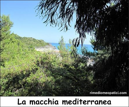 Macchia mediterranea - image Macchia-mediterranea2 on https://rimediomeopatici.com