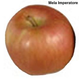 Melo - image Mela-Imperatore on https://rimediomeopatici.com