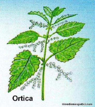 Ok con depurativi e diuretici - image ORTICA3 on https://rimediomeopatici.com