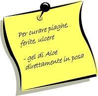 Aloe - image PER-CURARE-PIAGHE-FERITE-ULCERE_51 on https://rimediomeopatici.com