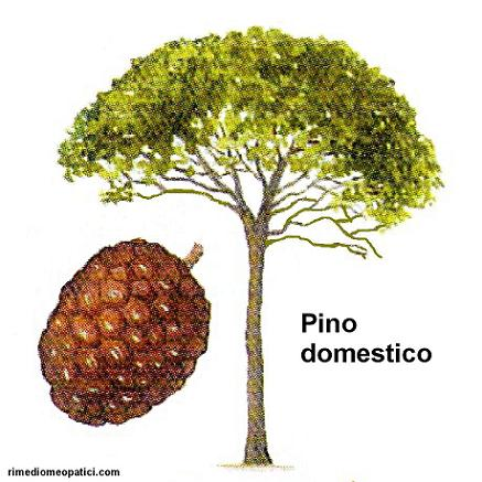 Mal di gola subito via - image Pino-domestico1 on https://rimediomeopatici.com