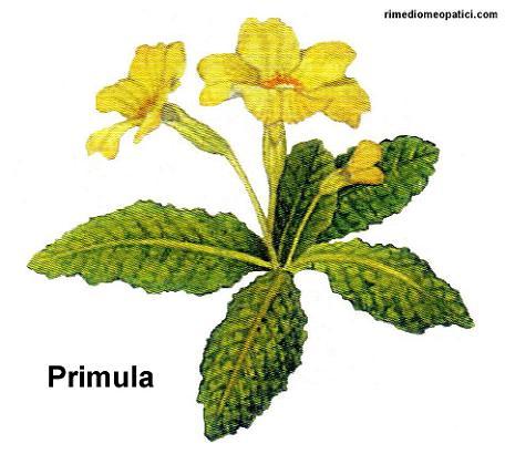 Fermiamo la diarrea - image Primula1 on https://rimediomeopatici.com