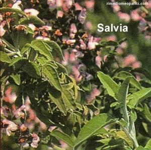 Liberi da calli, verruche, geloni - image SALVIA1-300x299 on https://rimediomeopatici.com