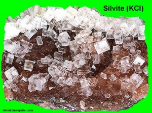 Kalium chloratum - image SILVITE2-300x222 on https://rimediomeopatici.com