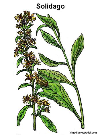 Fermiamo la diarrea - image Solidago2 on https://rimediomeopatici.com