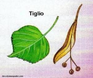 Spegniamo le infiammazioni - image TIGLIO-300x251 on https://rimediomeopatici.com