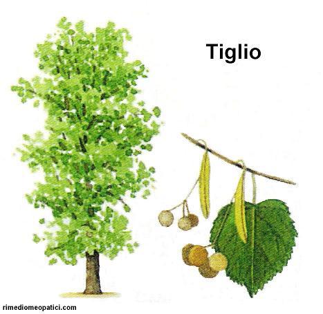 Alopecia Calvizie - image Tiglio_24 on https://rimediomeopatici.com