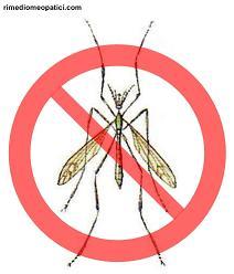 Repellente per zanzare e formiche - image Zanzara-comune_5.51 on https://rimediomeopatici.com